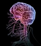 "Central Nervous System. A.K.A ""cns"""