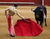 Bull fighting in action
