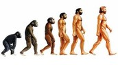 Theory of evolution model