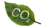 Crecimiento de la planta con el incremento de CO2