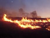 Grassland Wild Fire