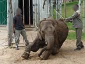 Wild animal abuse