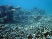 Deastruction Of Coral Reefs