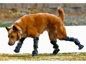 bionic dog legs