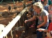 The kangaroo wants more!