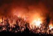big wildfire