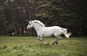 Teen Unicorn