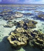 Fringe Reef