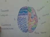 Brain Hemishpere