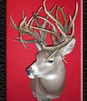 This is not a normal buck.