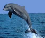 facts about this dolphin
