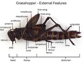 Grasshopper-labeled