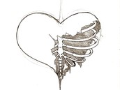 Rib Cage Supports and Protects the Heart