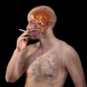 Your insides when you smoke!