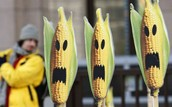 Corn people invasion.