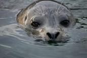 Help rehabilitate marine mammals.