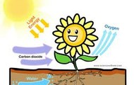 The eqaution for photosynthesis.