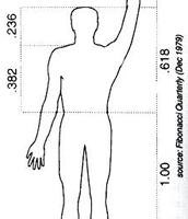 Arm Length Compared to Torso