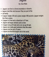1st Grade Report