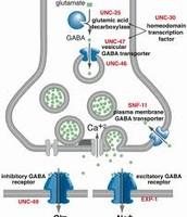 GABA cell receptor in detail