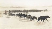 Dog sledding was the best way of transportation for mail