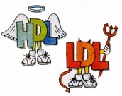 LDL and HDL