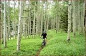 Bicicleta de Montañas