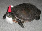 Turtle hats!