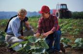 Agricultural Inspectors