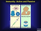 Immunity prevents a person from getting sick from a pathogen.