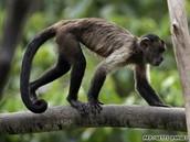 Why Help Monkeys
