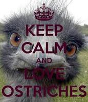 ostrich#3