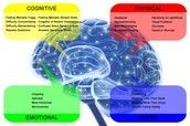 How Dose The Brain Work