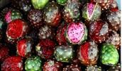 Fruta exótica con sabor exquisito producida en la zona de Jalisco, Mexico.