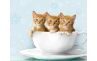Kittens in a teacup?