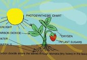 Photosynthesis Equation-