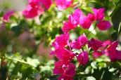 Flower desert