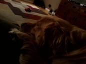 olivias dogs