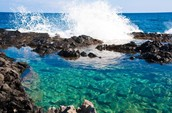 Activities That You Can Do At A Tide Pool