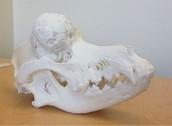 Cancerous mass on dog skull