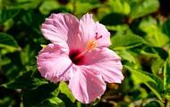 Bahamian Flowers