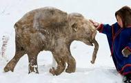 The poor elephant