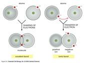 Covalent bond vs. ionic