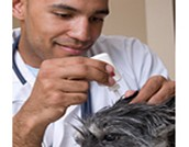 What is a Veterinarian