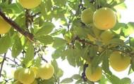 Fruto y hojas