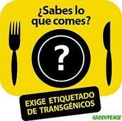 ¿Cual es el impacto en la ingesta y producción de los alimentos transgénicos en los consumidores adolescentes ?