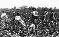 Field Slaves