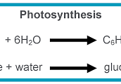 What are the final products of photosynthesis and how are the important to life on this planet??