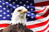 American Flag and our bald Eagle