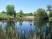 Ponds and brooks
